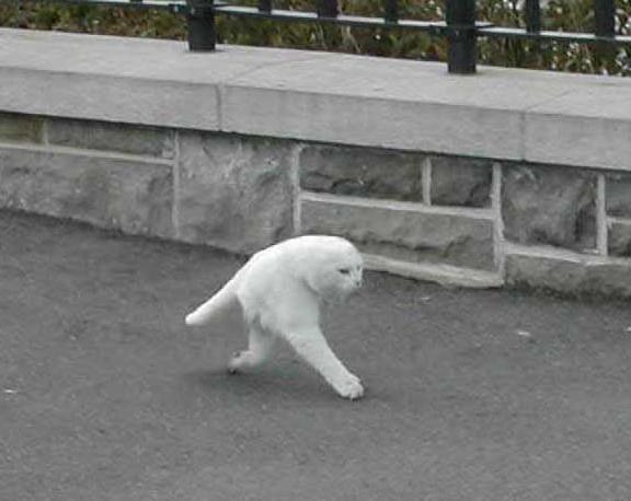 funny binatang :))