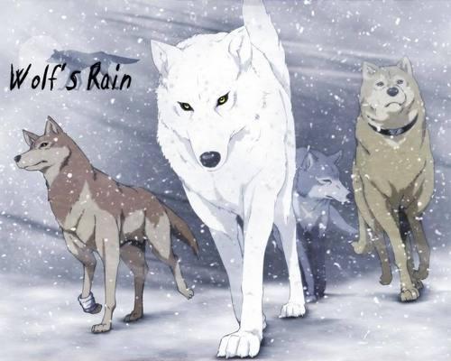 1 step ahead wolfs