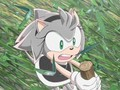 Carmel the hedgehog