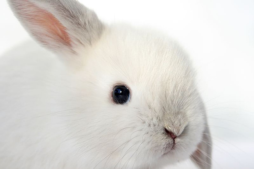Cute little white bunny