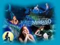 Mermaid wallpaper
