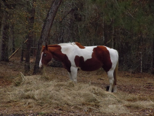 My big girl Rogue - horses Photo