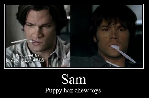 puppy sam, cute!