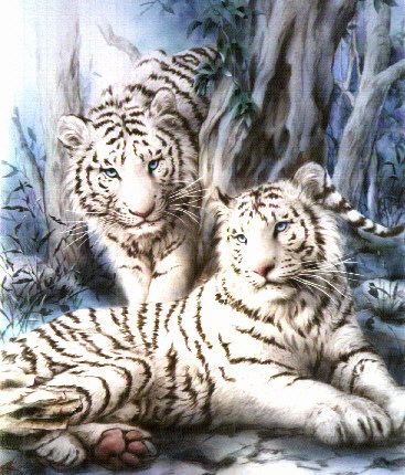White tigers!