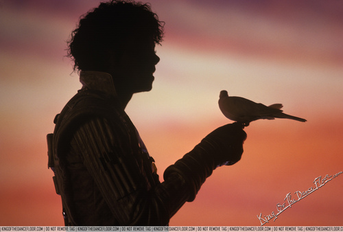 Captain Eo wolpeyper with a crow, a starling, and a kalapati called captain eo