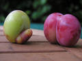 sexual fruit - sex-and-sexuality photo