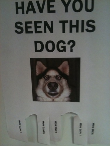Have Ты seen this dog?