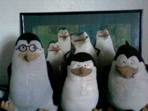 My Pengi Plushies ^-^