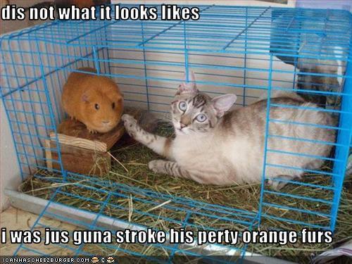 cute o what?? :D