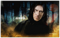 from Tim to Severus - tim-roth fan art
