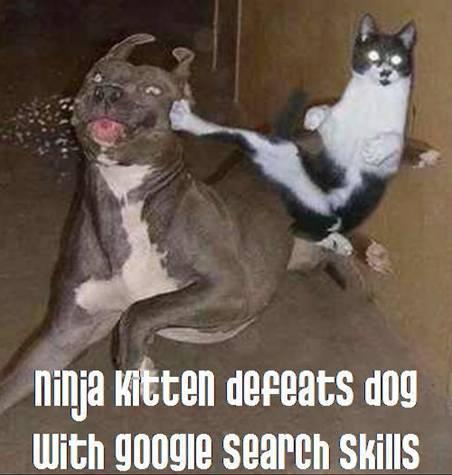 ninja kitten defeats dog with google procurar skills