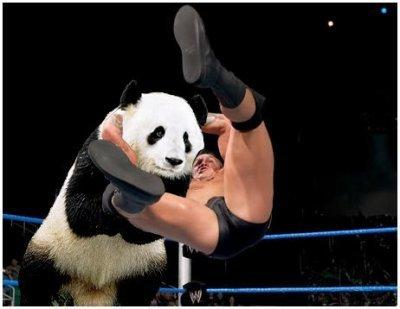 randy orton rko a panda