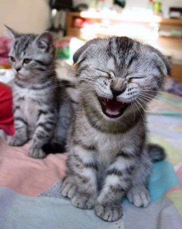 Kitty laughs at you  - the-miracles Photo
