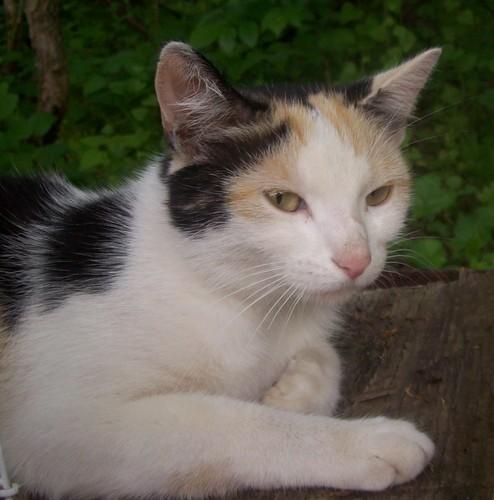 My kit-cat, Taffy