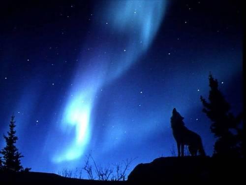 Wolf sillouhette VI