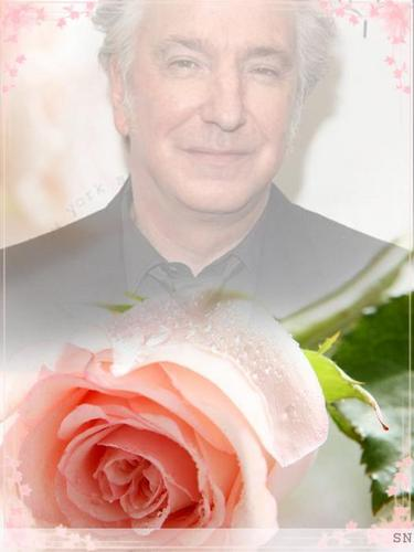 alan rickman my sweet surrender