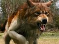 angry red wolf