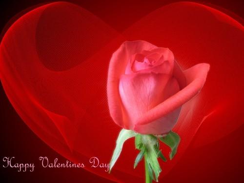 happy valentine renesmee09 !