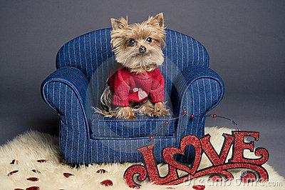 your Valentine gift!