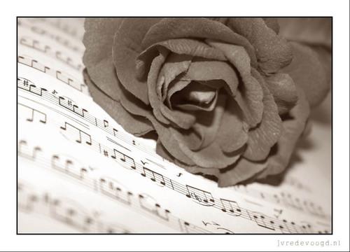 musique Fanart