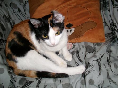 Ziva - my cat