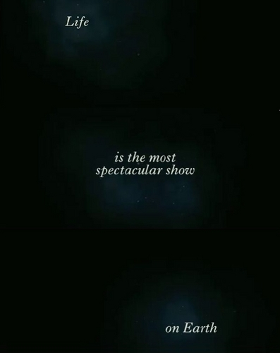 life is the most spectacular mostra on earth
