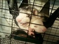 my ferrits - ferrets photo