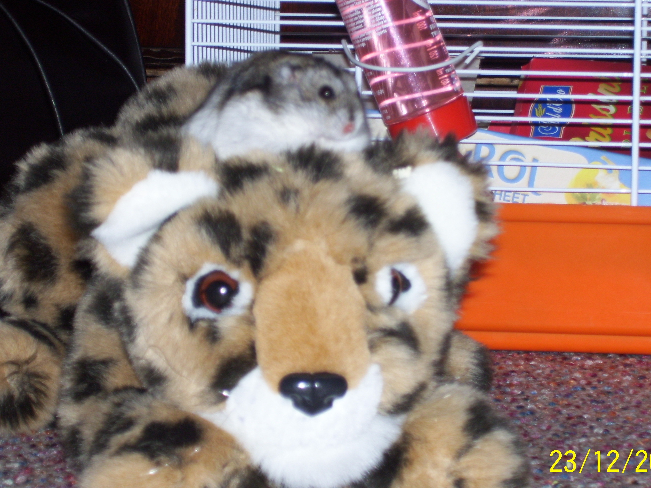 my hamster snuggy on toy's head