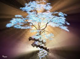 árbol of life...p's