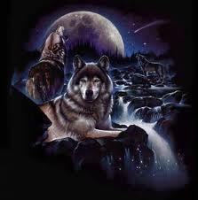 the Anubian's wolf pack wallpaper entitled wolves