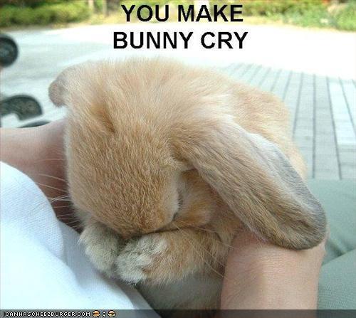 আপনি make bunny cry