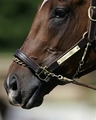 Barbaro - horses photo