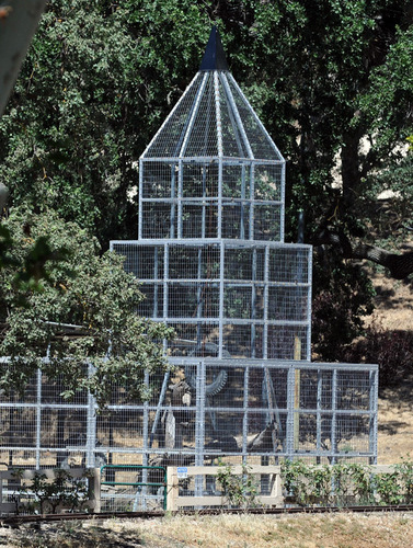 Bubbles Cage at Neverland