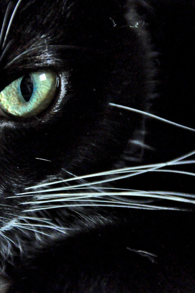 Night Cat Productions: Cat Of The Night = ^.^ =