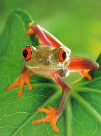 Cute little Froggie