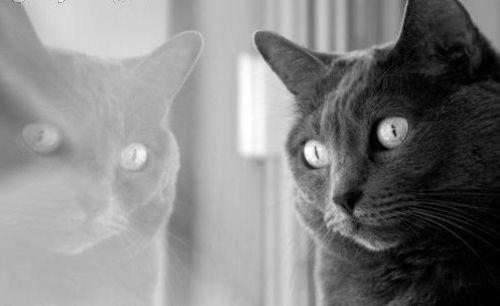백일몽 Kitty
