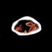 Skins - skins icon