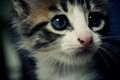 &lt;3 - cute-kittens photo