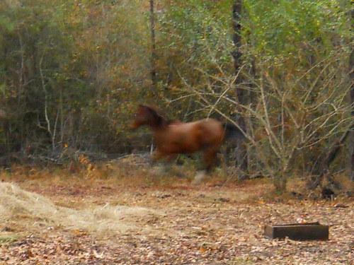 ♥My Horse♥