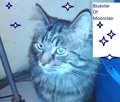 Bluestarofmoonclan