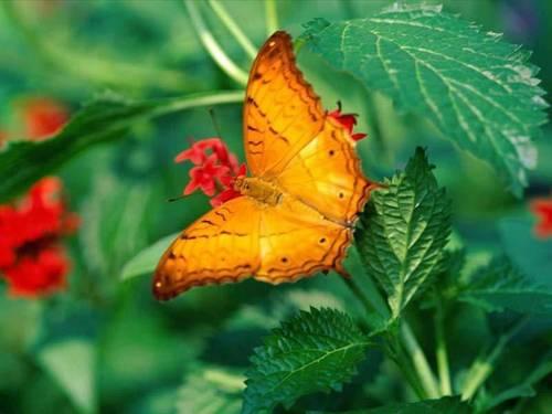God's orange
