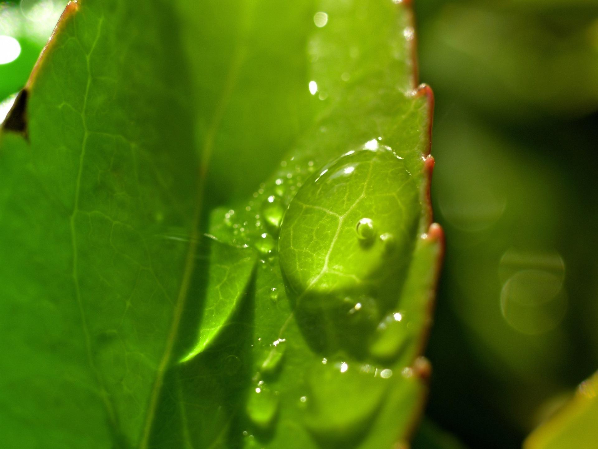 Green Nature Обои