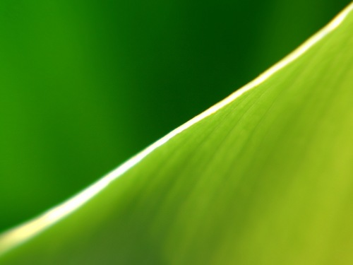 Green Nature wallpaper