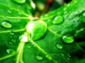 Green Nature Wallpaper - green wallpaper