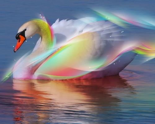 arco iris cisne