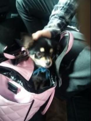Ruki's Dog Koron! - the-gazette Photo
