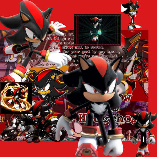 Nhím Shadow hình nền entitled Shadow