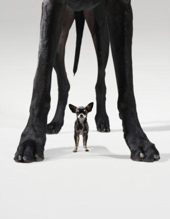 Tall & Small :)