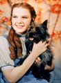 Wizard of Oz Stills - classic-movies photo