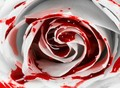 """See the beauty in the blood"" - vampires photo"